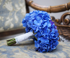 photo and flower. blue image