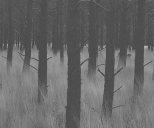 black and white and woods image