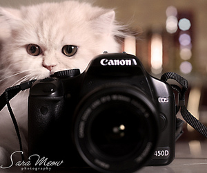 beautiful, cat, and cats image