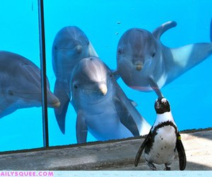 dolphin, animal, and funny image