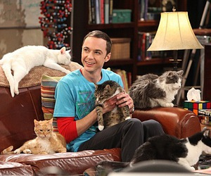 cat, sheldon, and the big bang theory image