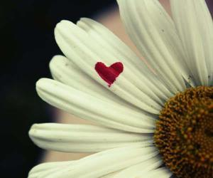 flowers, heart, and lovely image