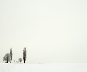 tree and winter image