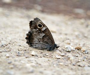 buterfly and papillon image