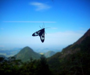butterfly, jam, and nature image