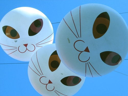 balloons and cats image