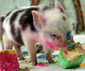 pig, cute, and paint image