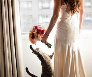 cat, flowers, and bride image