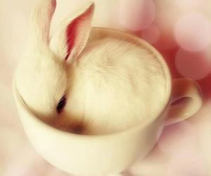 bunny, pink, and cute image