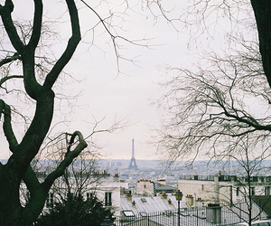 paris, tree, and photography image