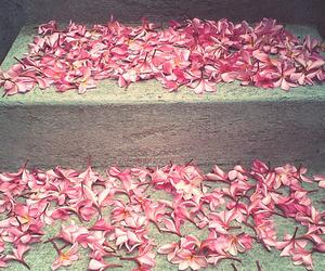 flowers, frangipani, and pink image