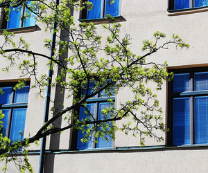 branches, color, and windows image