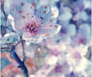 flowers, light, and raindrops image