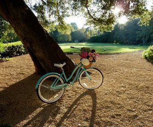 bike, grass, and nature image