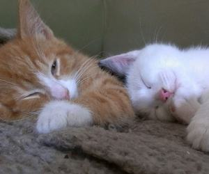 adorable, kittens, and baby image