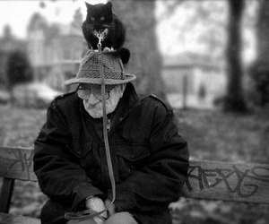 cat, funny, and old man image