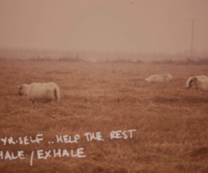 foals, indie, and music image