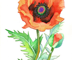 poppy and lest we forget image