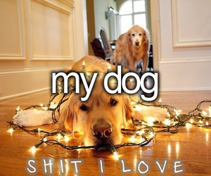 dog and shit i love image