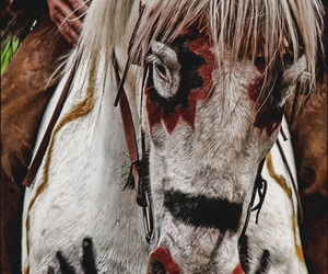 horse, indian, and paint image