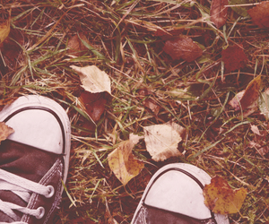 autumn, converse, and leaves image