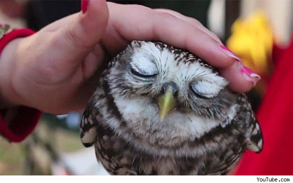 image about cute in owl obsession by angelica