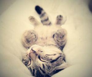cat, gatito, and lindo image