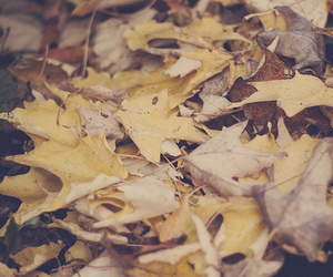 365, natural, and autumn image