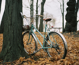 bike, autumn, and fall image