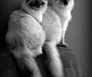 black and white, cat, and sisters image