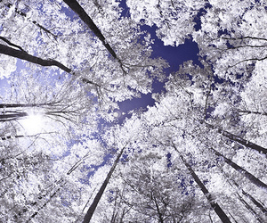 clouds, trees, and winter image