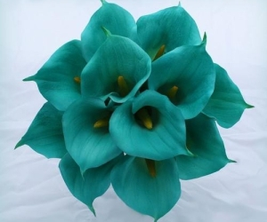 color, flowers, and teal image