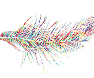 feather and pretty image