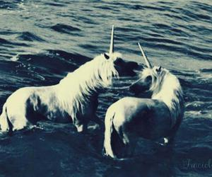 unicorn, sea, and water image