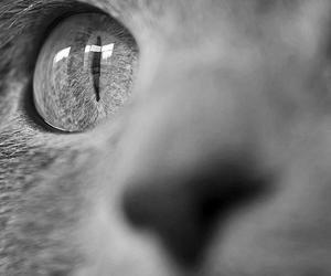 cat, eyes, and eye image