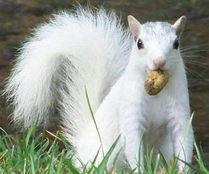 squirrel, cute, and white image