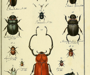 beetles, insects, and scarab image