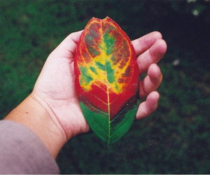 leaves, nature, and green image
