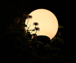 daffodil, moon, and nature image