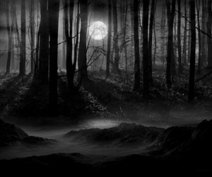 moon, forest, and dark image