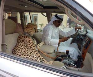 funny, عربي, and Dubai image