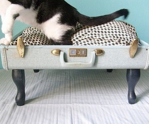 bed, cat bed, and interior design image