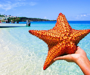 beach, starfish, and summer image