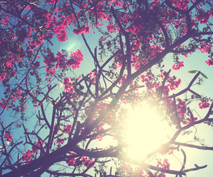 flowers, sun, and tree image