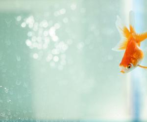 goldfish, animal, and fish image