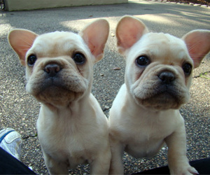 dog, cute, and twins image