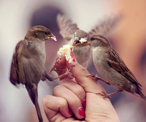 bird, photography, and nature image