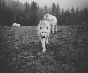 wolf, animal, and nature image