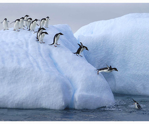 penguin, ice, and snow image
