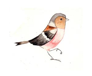 bird, art, and drawing image